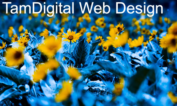 Business and Corporate Website Design